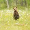 1 рубль 1947 г. - последнее сообщение от Медведь1977